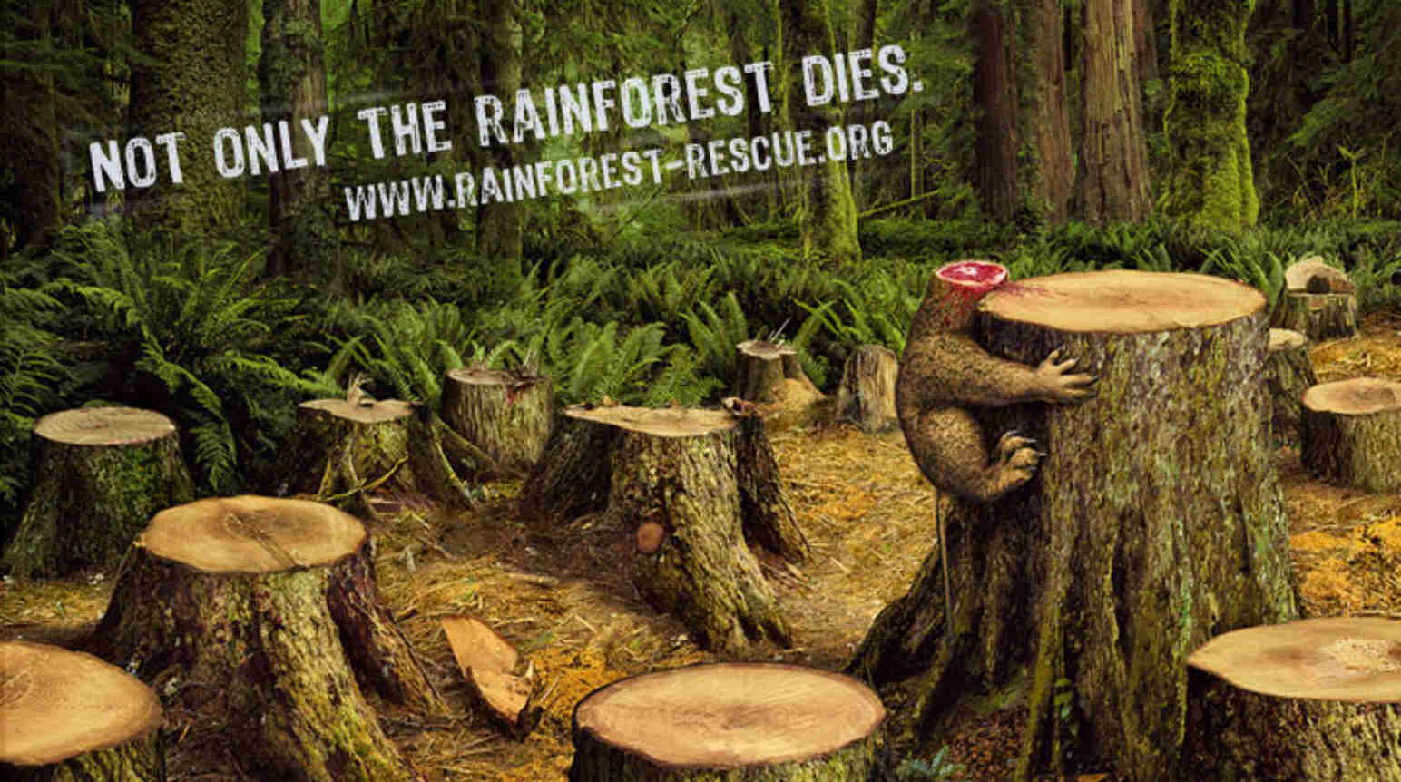 the disappearing rainforests Save the rainforest—the rallying cry of environmentalists for decades—ultimately failed despite a slight slowdown in deforestation in the 1990s and 2000s, says slate, trees are now.